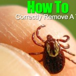 How To Remove A Tick