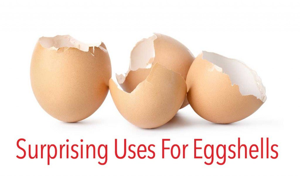 uses-for-eggshells