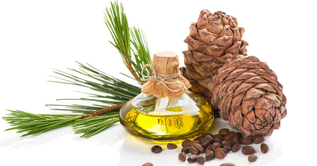 cedar oil for bed bugs prevention