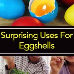 Surprising Uses For Eggshells
