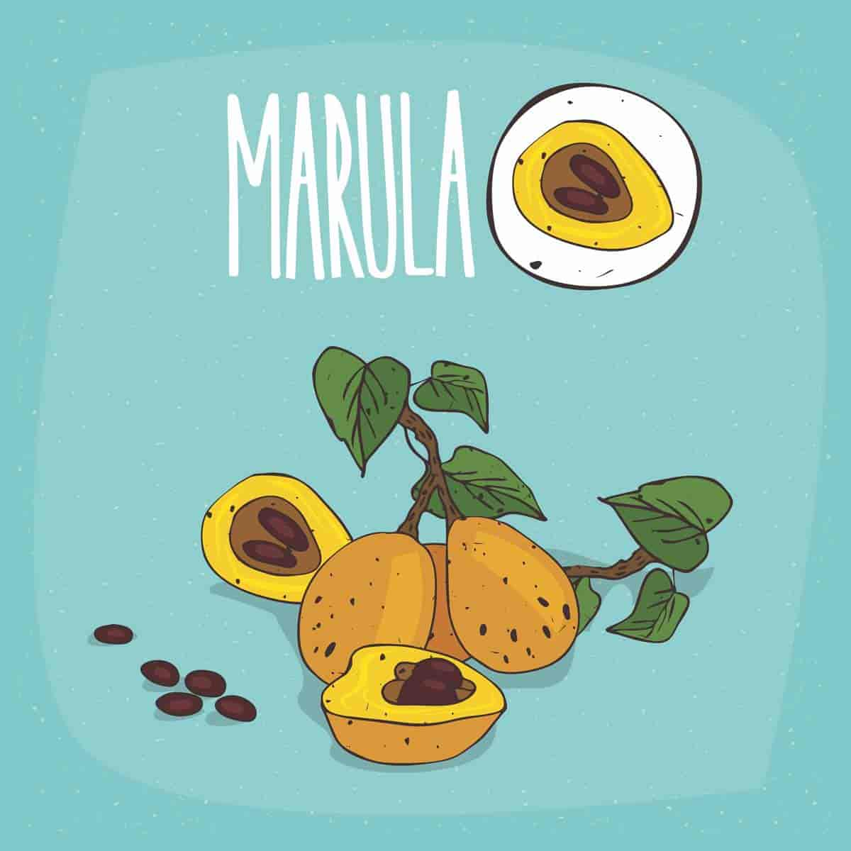 benefits of marula oil
