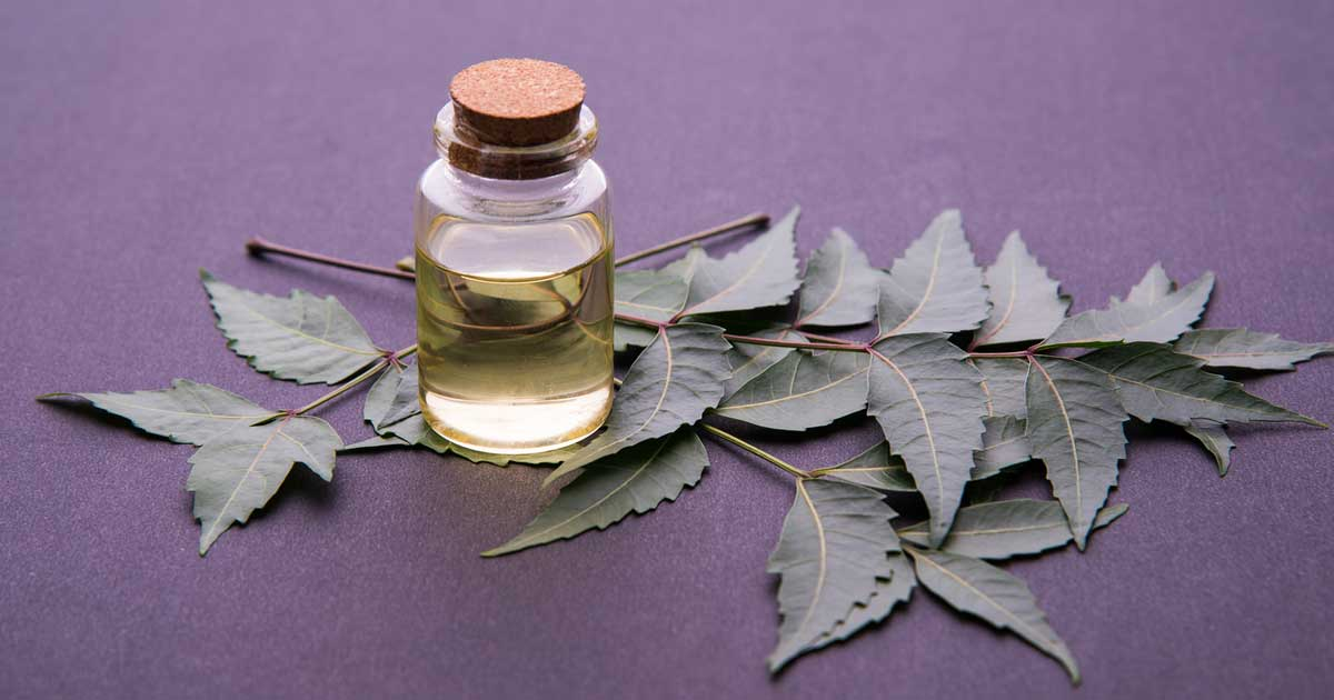 What is Neem Oil And Is It Good For You?
