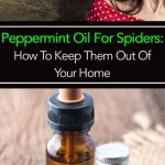 Peppermint Oil For Spiders: How To Keep Them Out Of Your Home