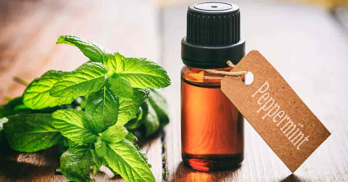 labeled bottle of peppermint oil next to peppermint leaves on wooden table